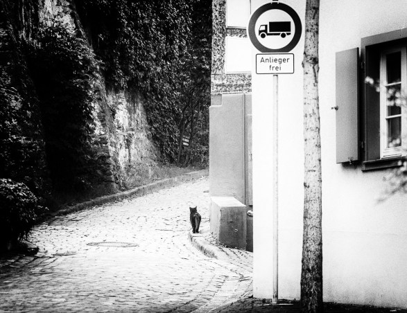 Fototour Ettenheim
