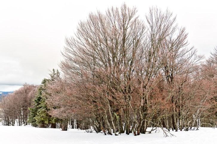 Frostige Bäume auf dem Kandel