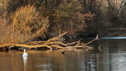 Vögel in den Rheinauen