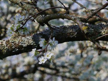 von der Frühlingssonne verwöhnt