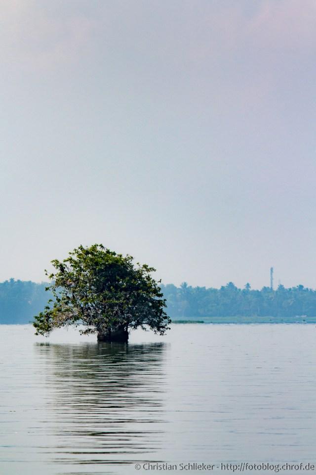 Backwaters Baum