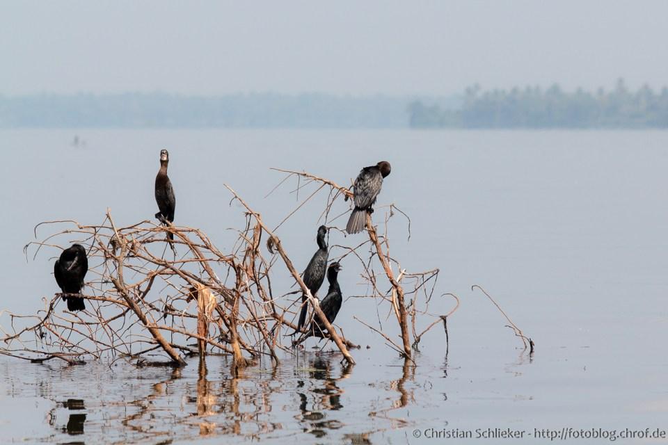 Vögel Aryad See