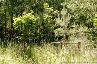 Schranke im Wald