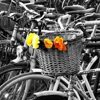 Cute Bike in Flower Power