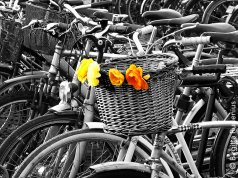 Bike in Flower Power