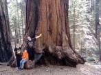 Sequoia National Park, 2015