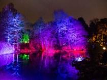 Bild von Peter S. - Winterlichter im Palmengarten