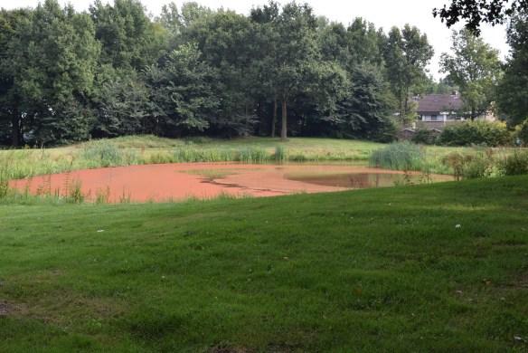 grasveld en vijver