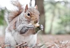 scoiattolo_mark_scadding