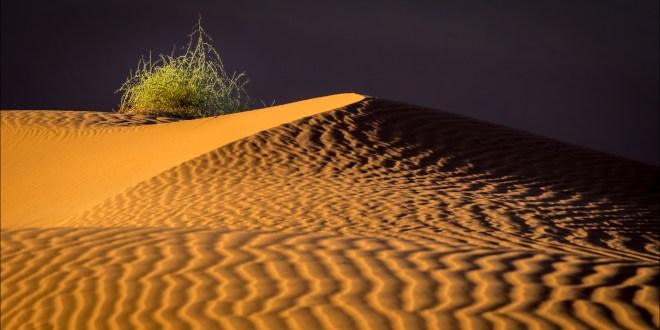Richard Leloup – Namibië landscape