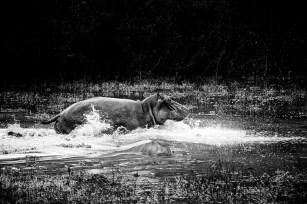 Brigitte_nijlpaard