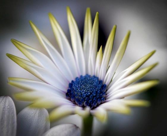 46 fleur 2 .
