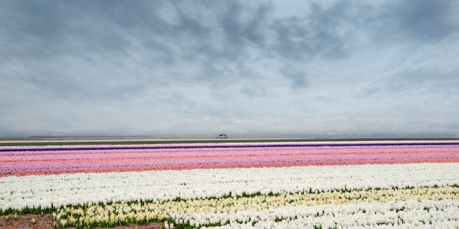 Chris Luyckx – Texel