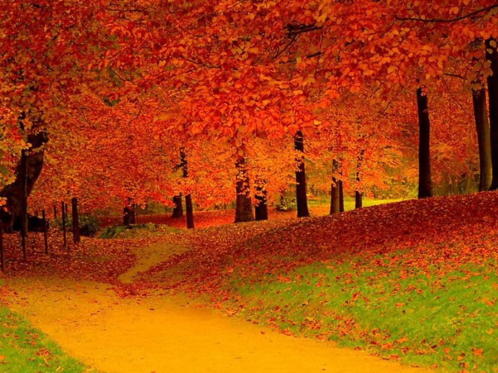 Cartoon Fall Wallpaper Скачать фотообои для рабочего стола листопад осень лес