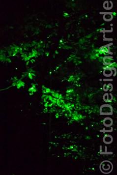Schattenwald_FotoDesignArt_83