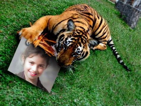 Fotoefectos con Tigres.