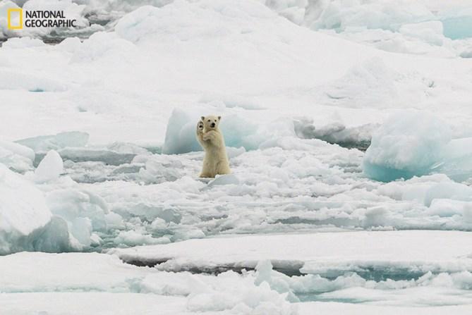 Un saludo desde el Ártico, Svalbard
