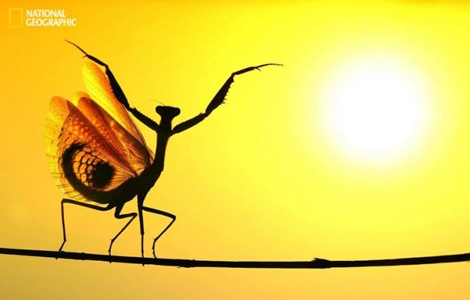 El protector del sol, Nicosia (Chipre)