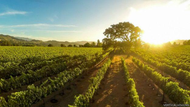 Atardeceder en un viñedo de Santa Inez, California