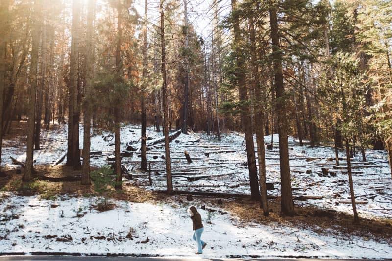 Yosemite (17 of 59)