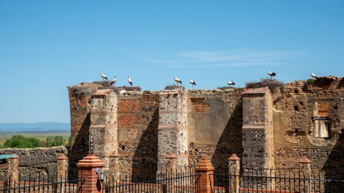 Gygning Med Storke