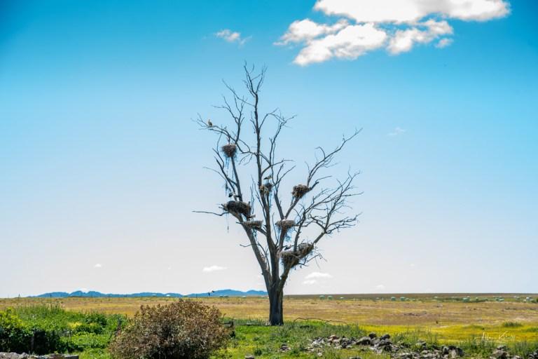Træ Med Storke