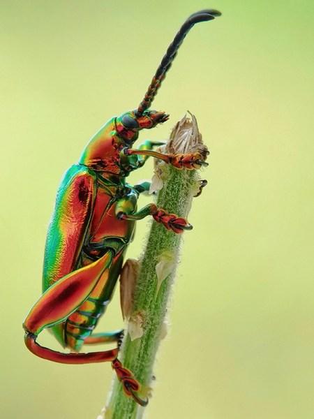 come fotografare insetti con fotografia macro soffietto e tubi di prolunga