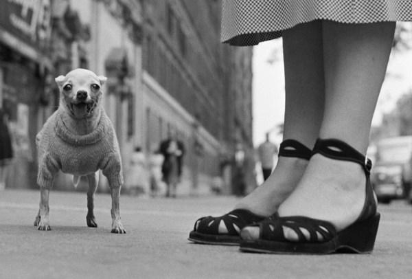 Elliott Erwitt fotografia bianco e nero cane