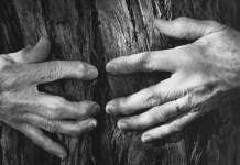 fotografia fotografo americano wynn bullock albero e mani