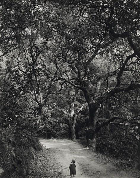 wynn bullock fotografia paesaggio
