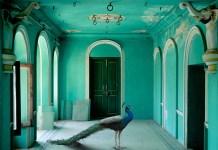 karen-knorr_ pavone_palace-udaipur_2008_aware_women-artists_artistes-femmes-
