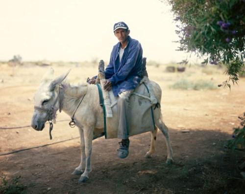 fotografia asino bianco israele