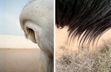 Jitka Hanzlová fotografia cavalli