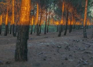 denis cherim coincidence project fotografia coincidenze sincronicita foto immagini alberi e luce