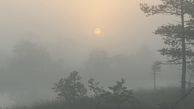 Sunrise over marshland ponds and trees through thick fog