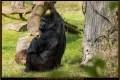 08_ZoologGartenBerlin_IMG_1182_k