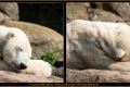17_ZoologGartenBerlin_IMG_1481_k
