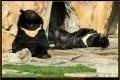 19_ZoologGartenBerlin_IMG_1498_k