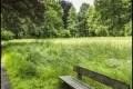 Schlosspark Buch