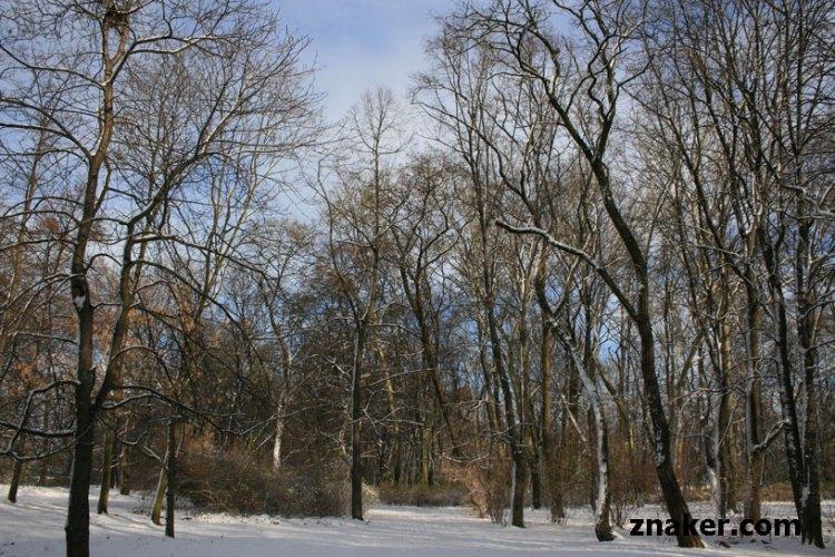 drzewa-warszawa-zima