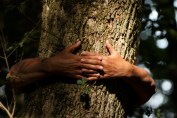 ruky strom
