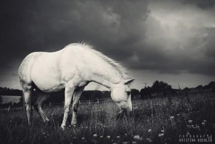 animal photography | fotografie kristina koehler