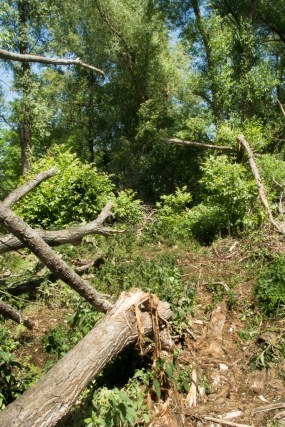 Undurchdringliches Unterholz