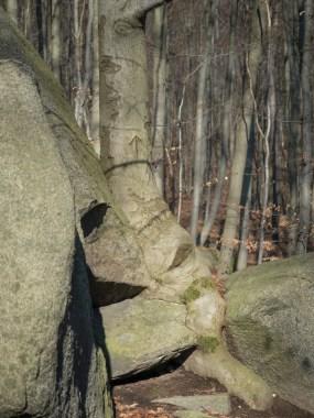 Noch Stein oder schon Baum?