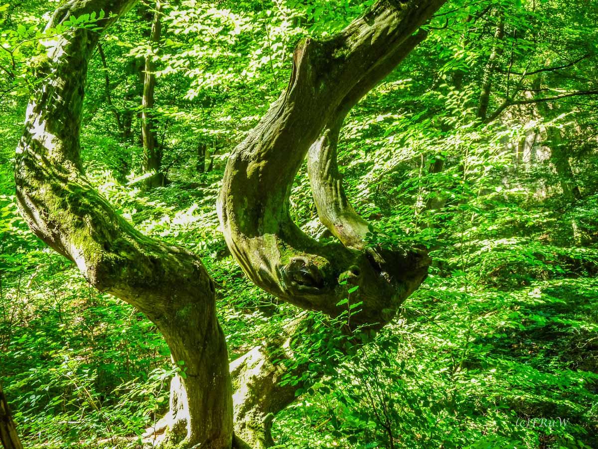 Baum im Grünkleid