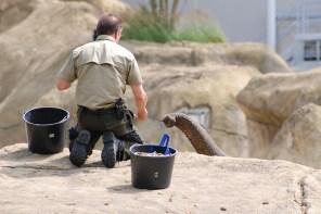 07 06 Zoo Köln 278FC