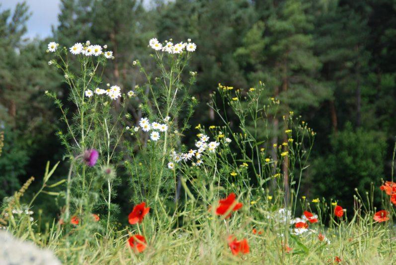 Noch mehr Wildblumen