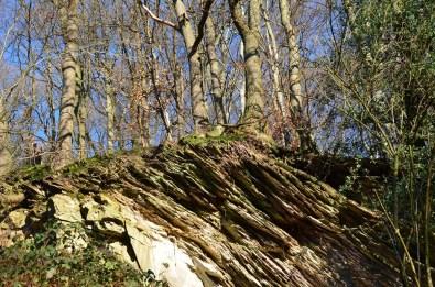 Steinbäume