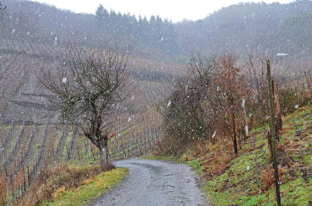 Weinberge im Winter
