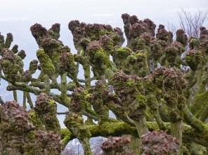 Petersbergbäume